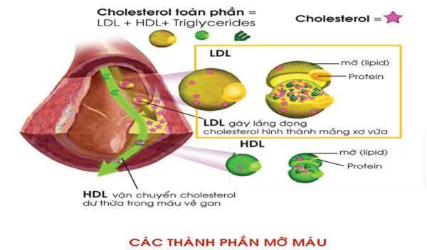 Thận trọng khi dùng thuốc hạ mỡ máu rosuvastatin