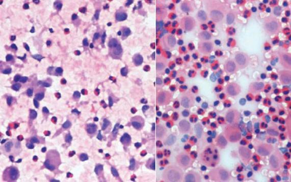 Quy trình nhuộm hóa học tế bào